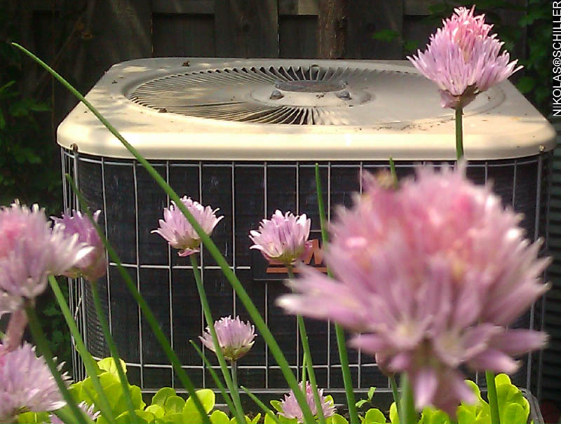 Blooming Pink Chives and the Air Conditioner - close up and far away